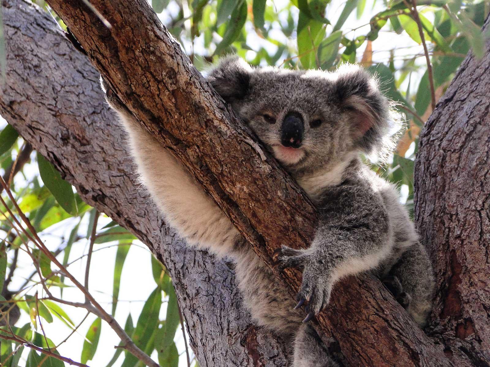 Magnetic Island - Australia